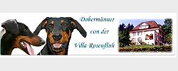 Rosenfluh_Banner_Dobermaenner-grey250